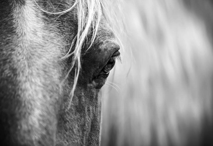 Beneficios de la terapia con caballos para el tratamiento de la adicción