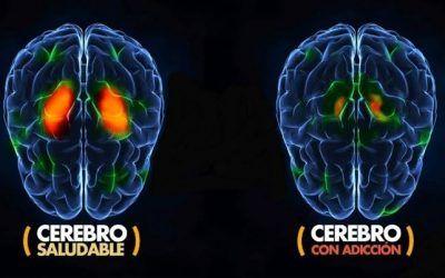 Sistema dopaminérgico y adicción: ¿cómo se relacionan?